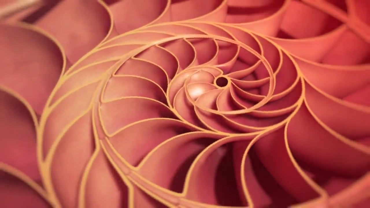 Captura-Nature by Numbers (Fibonacci Sequence & The Golden Ratio).mp4-1.png
