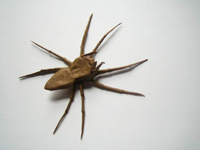dolomedes.jpg