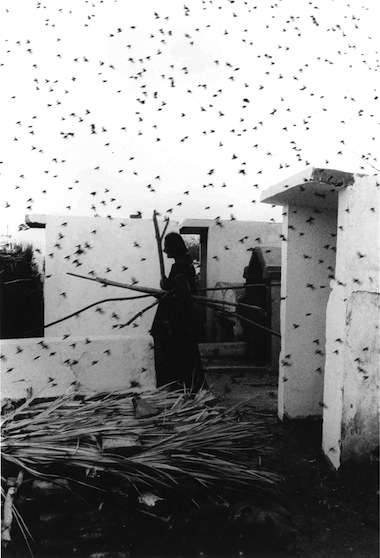 Pajaros 01_graciela iturbide.jpeg