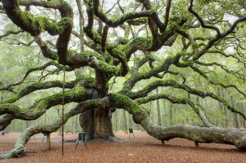 Angel Oak - Charleston, South Carolina.jpg