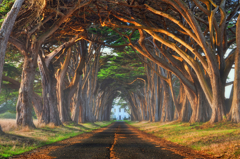 Natural tree tunnel, Portuga.jpg