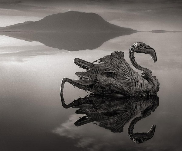 lake-natron-calcium-salt-petrified-animals-nick-brandt-1.jpg