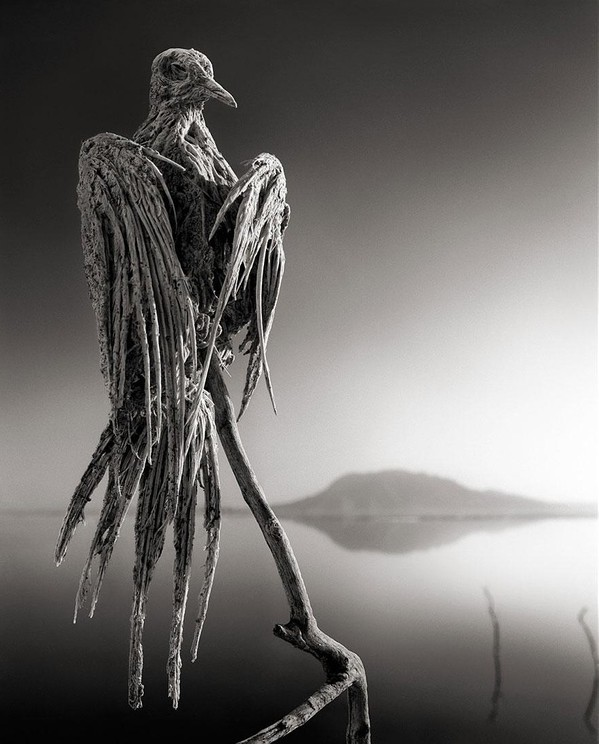 lake-natron-calcium-salt-petrified-animals-nick-brandt-2.jpg