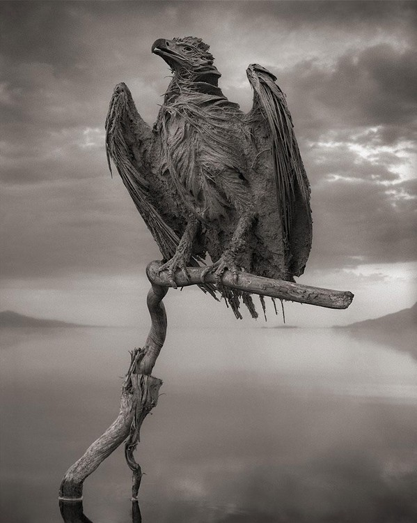 lake-natron-calcium-salt-petrified-animals-nick-brandt-3.jpg