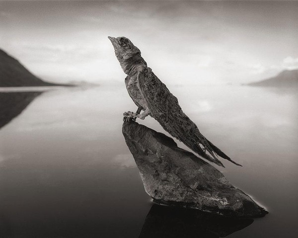 lake-natron-calcium-salt-petrified-animals-nick-brandt-5.jpg