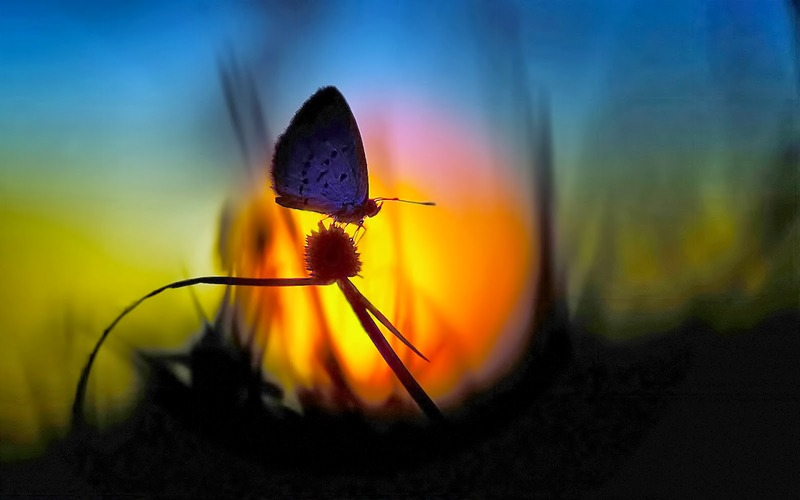 flower-on-butterfly-evening-time.jpg