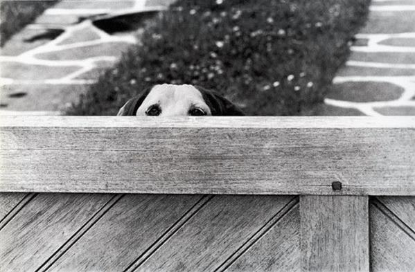 Vintage Dog Photographs by Elliott Erwitt (4).jpg