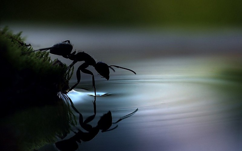 water-closeup-insects-ants-ripples-macro-reflections-wallpaper-515403.jpg