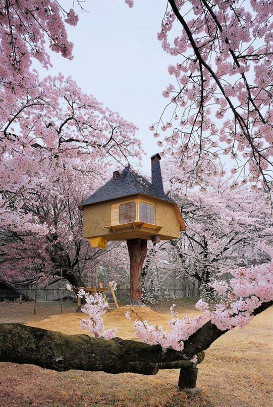 tree_houses_02_1207191643_id_592032.jpeg