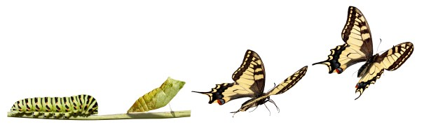 From_Caterpillar_to_Butterfly.jpg