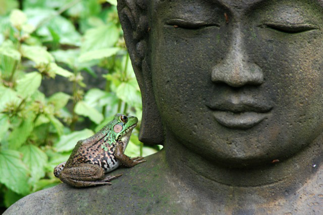 frog-on-buddha-1.jpg