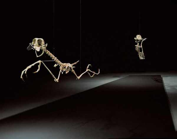 coyote-road-runner-cartoon-skeletons-Hyungkoo-Leejpg.jpg