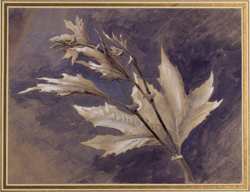 Ruskin_ Study of young leaves of plane, in light and shade_© University of Oxford - Ashmolean Museum.jpg