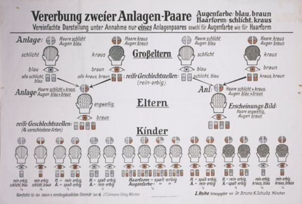 A eugenics chart entitled  -A eugenics chart entitled Hereditary traits passed down from two mates-.jpg