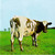Atom Heart Mother - front.jpg