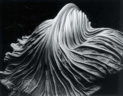 cabbage-leaf-edward-weston-1931.jpg