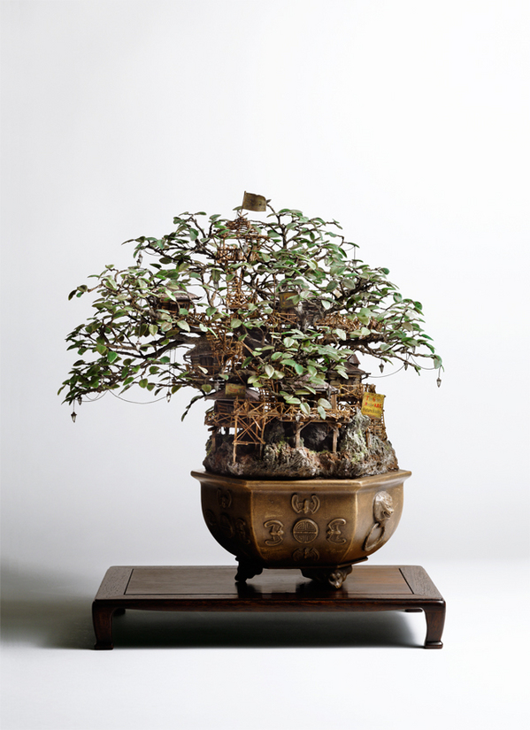 1_Aiba_Bonsai-A_view11.jpg