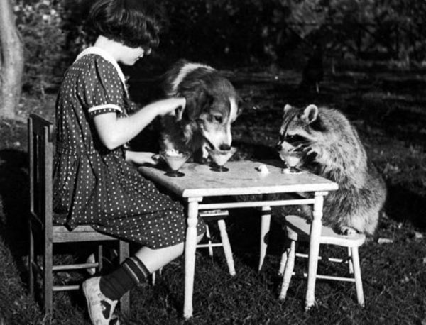 A girl has tea with her pet dog and raccoon, Massachusetts, 1930.jpg