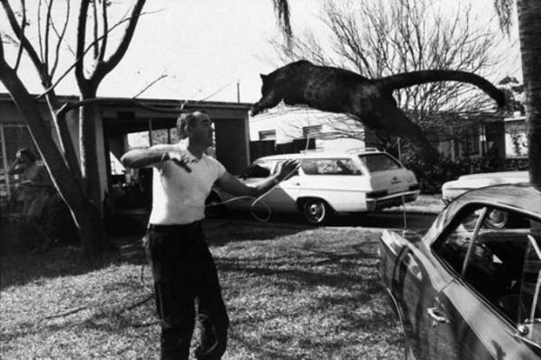 A pet black leopard and his owner, Florida, 1971.jpg
