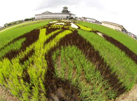 art-at-rice-field.jpg